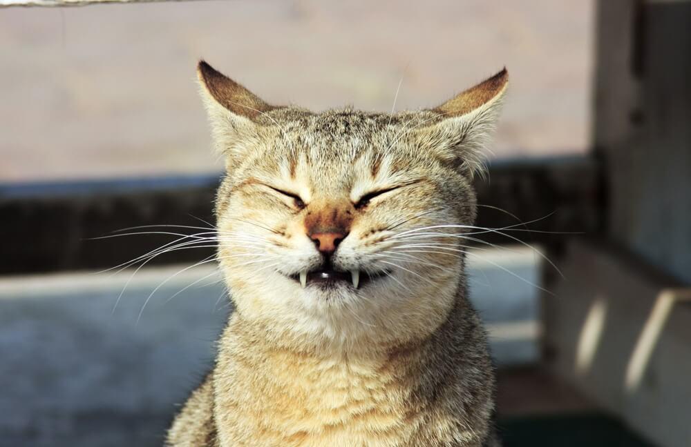 cat-surprise